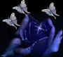 kékrózsa